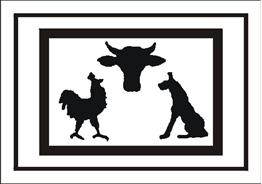 Obrazek dla kategorii Żywe zwierzęta (701-02)