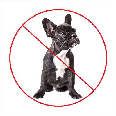 Zakaz wyprowadzania psów. (823-166)